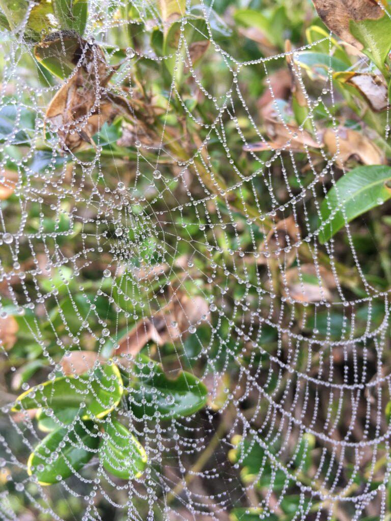 Cobweb of distractions